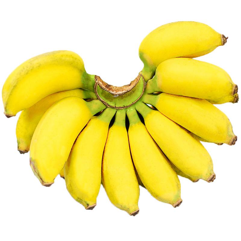 纯香果 广西香蕉 新鲜水果 小米蕉 10斤带箱 15.8元包邮(可用农场红包)